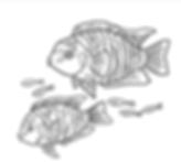 fish msall.PNG