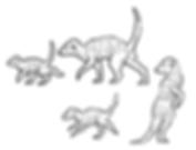 meerkat small.PNG