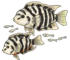 fish spot.png