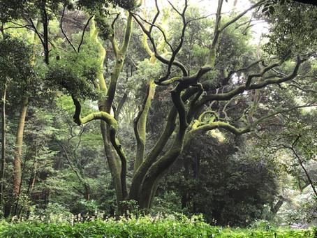 都心にある広大な森を歩く 頭も体もスッキリ!