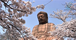 東海市の櫻(愛知県東海市)