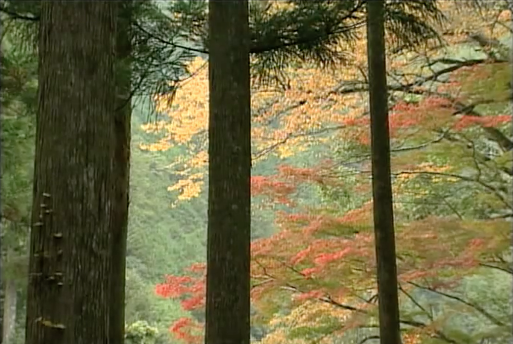 熊野古道・中辺路(和歌山県田辺市ほか)