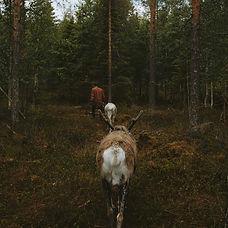 kujala9_ruka-kuusamo_2019_amslebrun.jpg
