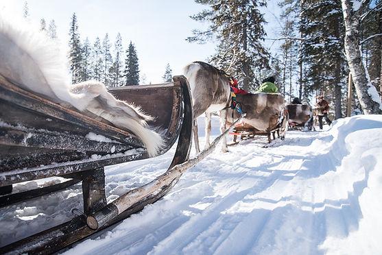 Kujalan_porotila,_nettikäyttö-4884.jpg