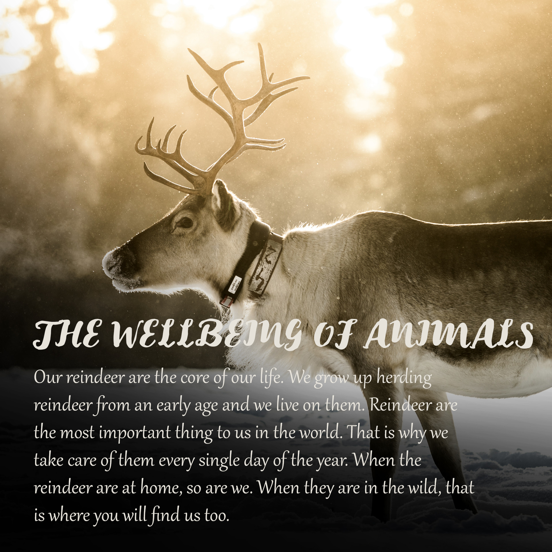 WELLBEING OF ANIMALS