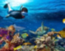 a-tourist-enjoying-snorkeling-in-mnemba-