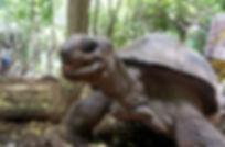 giant-tortoise-prison-island-zanzibar.jp