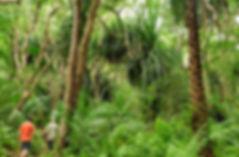 jozani-forest-tour-on-zanzibar.jpg