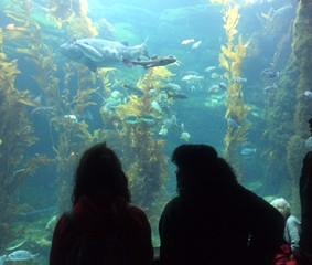 Birch Aquarium Field Trip