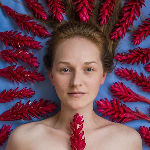 Gengibre vermelho   Alpinia purpurata