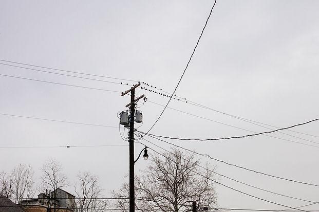 Prosa dos pássaros - Maryland, 2013.