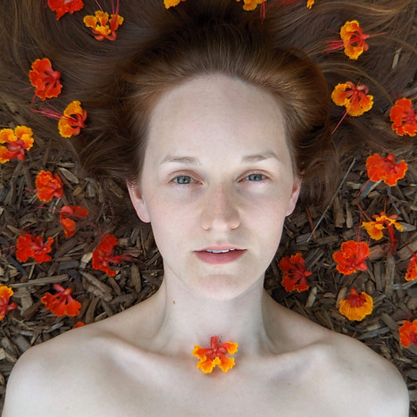 Flor de pavão | Caesalpinia pulcherrima