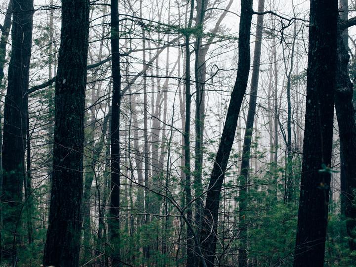 Carolina Schaffer Fotografia.