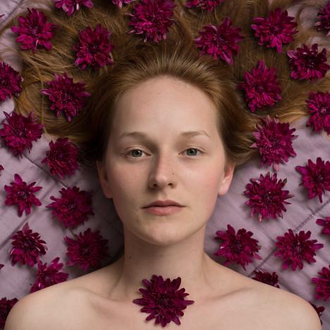 Crisântemo | Chrysanthemum sp.