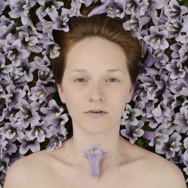 Kiri | Paulownia tomentosa