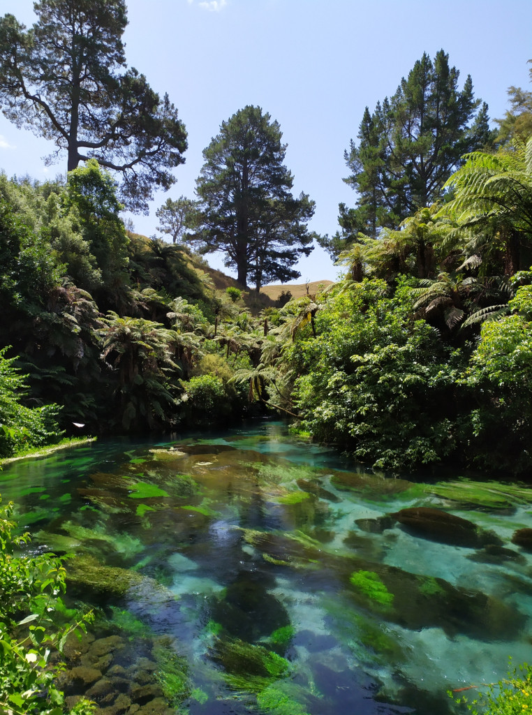 Foto scattata al Blue Spring Putaruru, NZ.