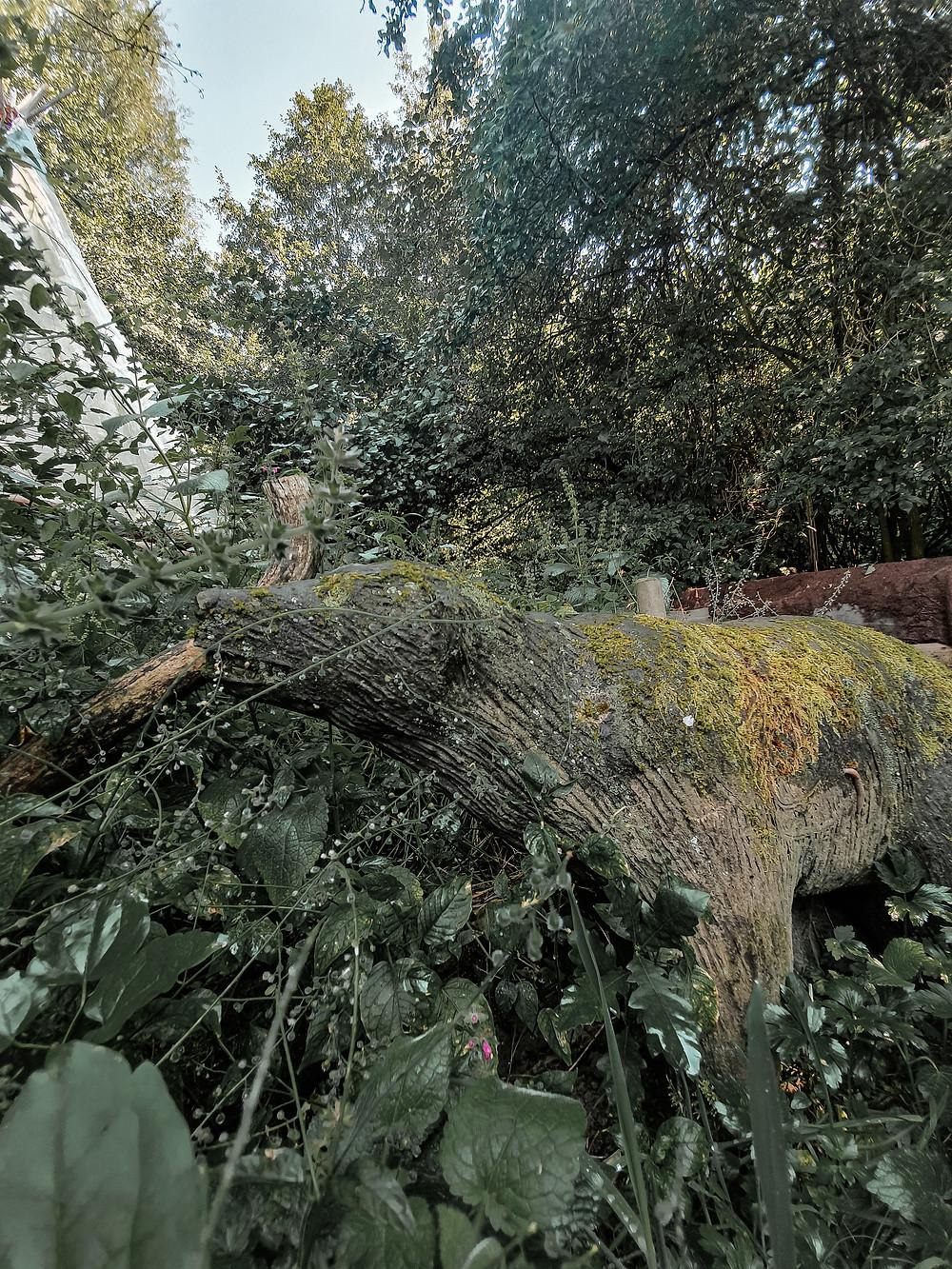 Statua di un cane su cui la natura sta seguendo il suo corso, ricoprendone il corpo intero di fiorellini muschio e foglie.