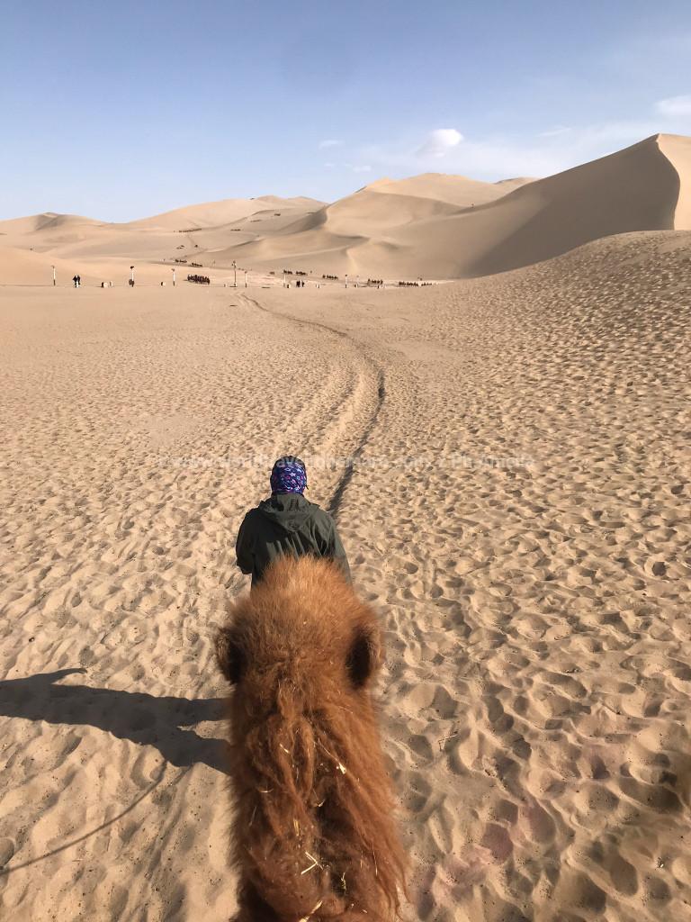 Vista del deserto da sopra il dorso di un cammello a Dunhuang, nel Gansu, Cina.