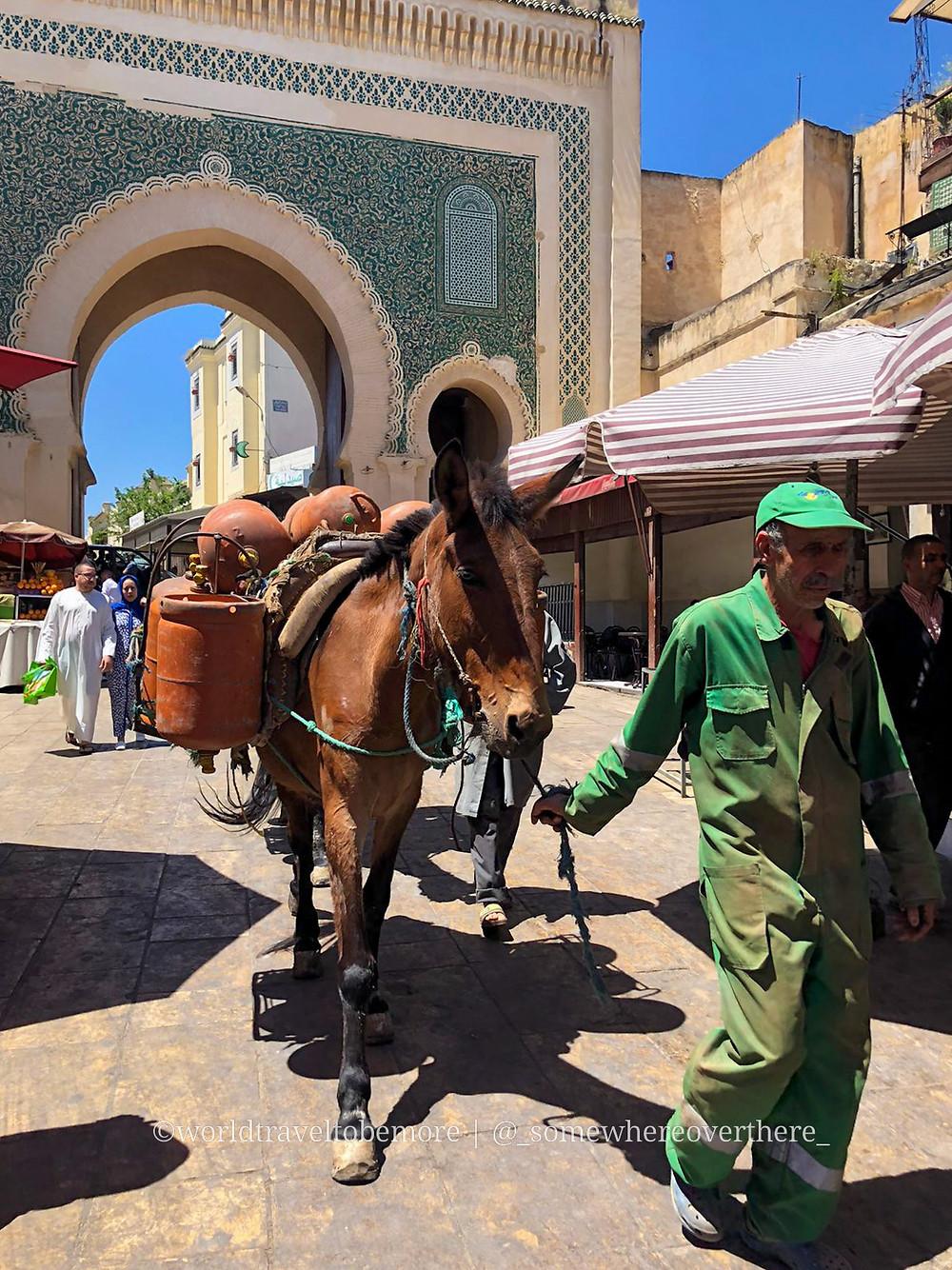 Alle spalle del cavallo carico di bagagli, la porta blu di Fez, Marocco. |worldtraveltobemore.com