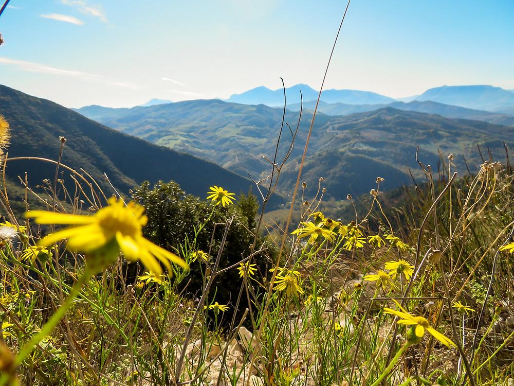 Panoramica paesaggistica con fiorellini gialli in primo piano. Sullo sfondo le sagome delle montagne mentre la nebbia del mattino si dirada.