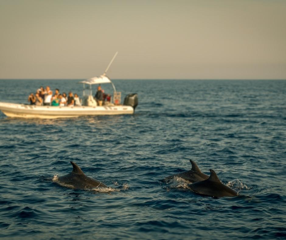 Partecipando ad un nostro viaggio di gruppo, contribuisci a sostenere Fondazione Cetacea, ONLUS a tutela e cura degli animali marini in alto Adriatico. In foto, un branco di delfini, in secondo piano una barca di turisti attenti all'avvistamento.