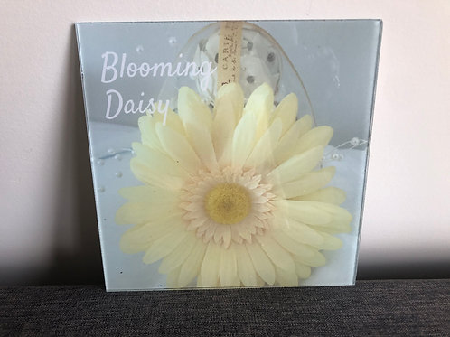 BLOOMING DAISY