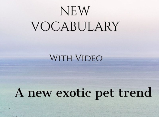 Free Tutorial: New Vocabulary