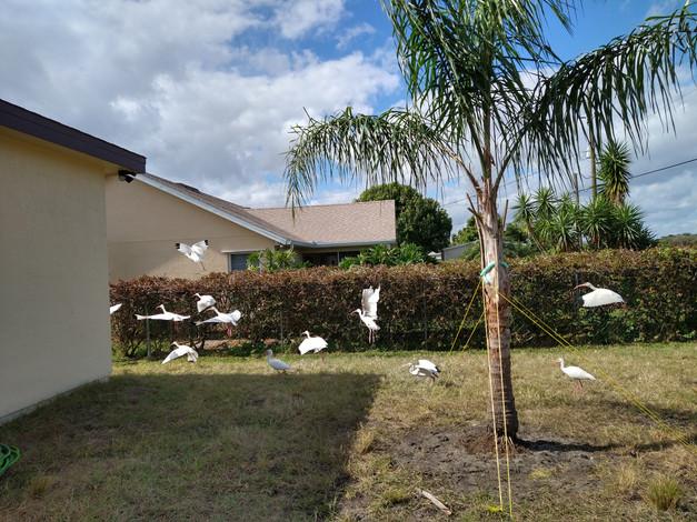1837 Ardmore St NE Palm Bay