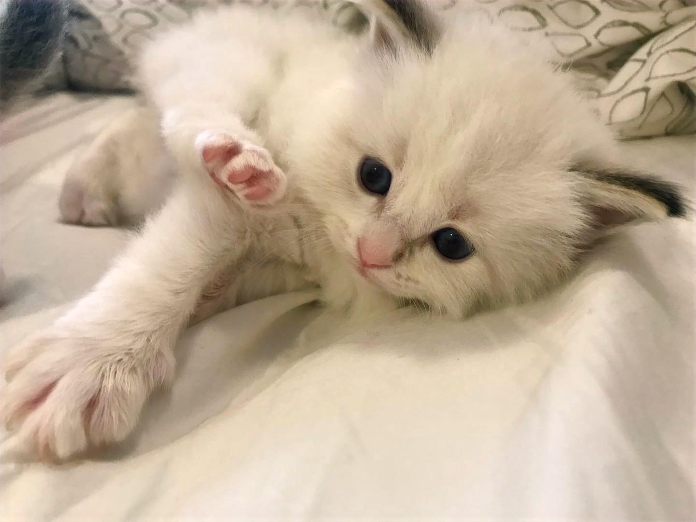 kitten1-5_edited.jpg