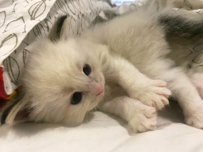 kitten1-2_edited.jpg