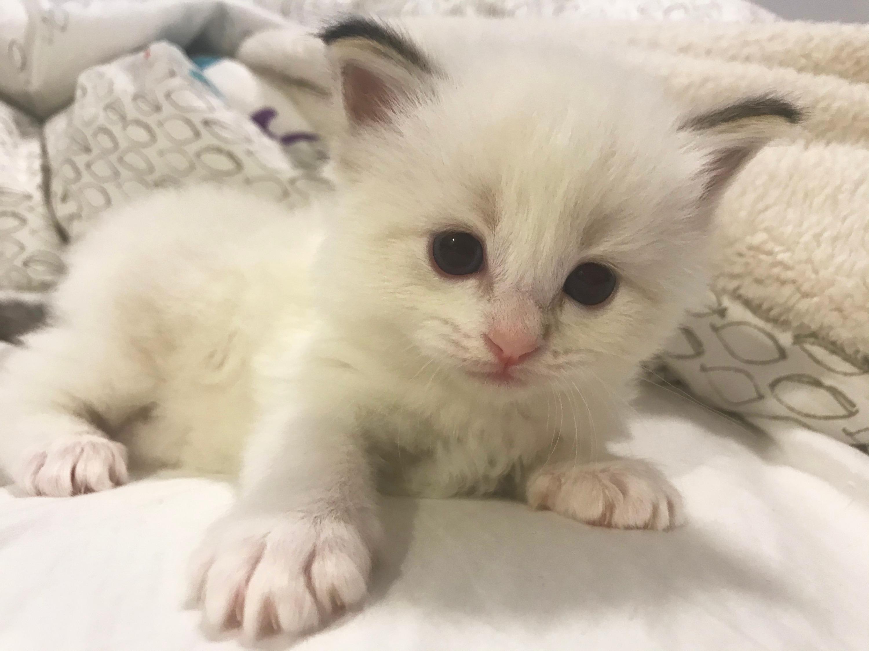 kitten1-3_edited.jpg