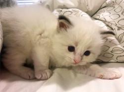 kitten1-13_edited.jpg