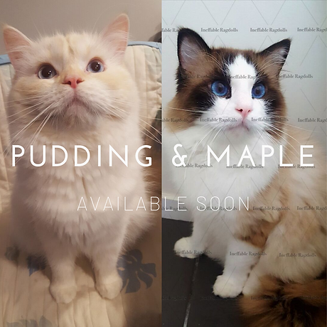 Pudding & Maple.png