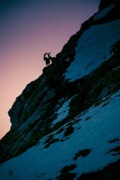 photographe montagne - Bouquetins
