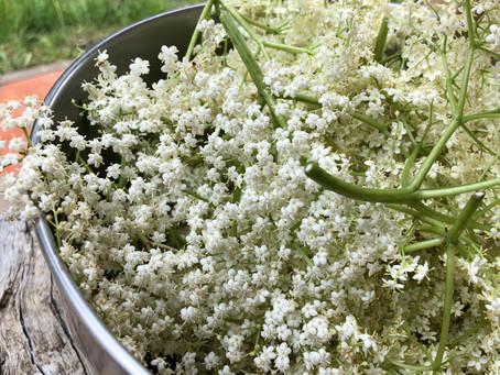 ¿Qué tiene de especial el cordial de flores de saúco?