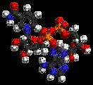 NAD%2B-from-xtal-2003-3D-balls_edited.pn