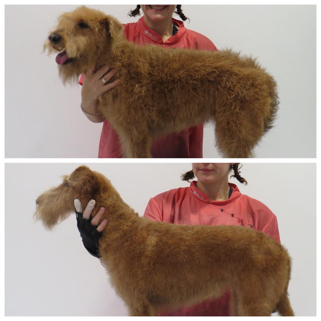 Tangled & Mangled Bishop Stortford Dog Grooming