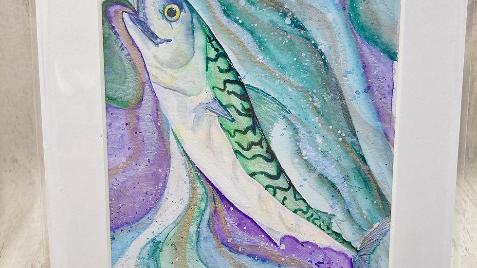 Cornish Mackerel