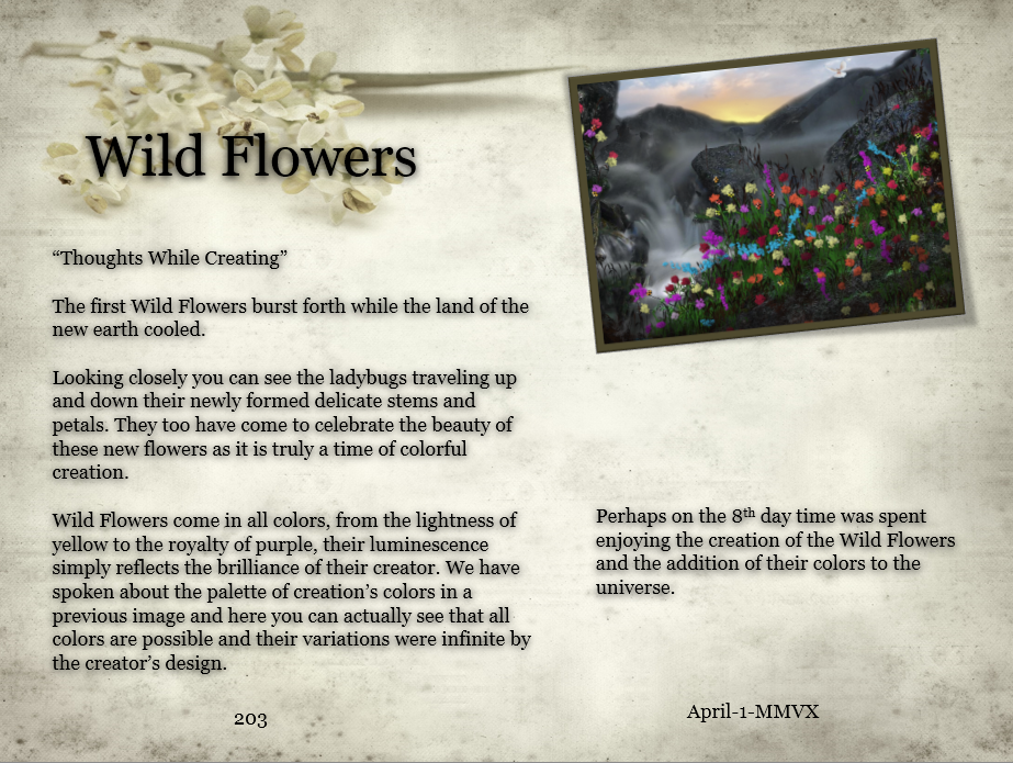 Wild Flowers Thoughts