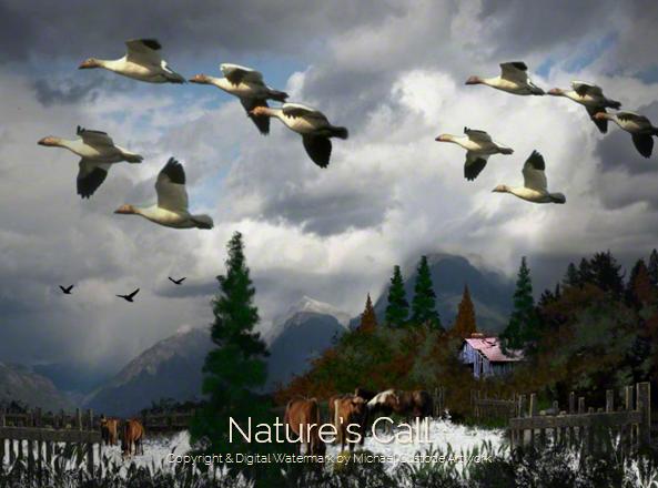 217 Nature's Call
