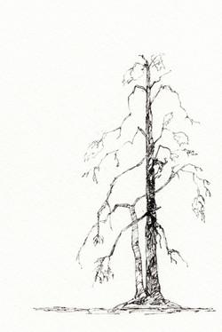 Minimal Tree