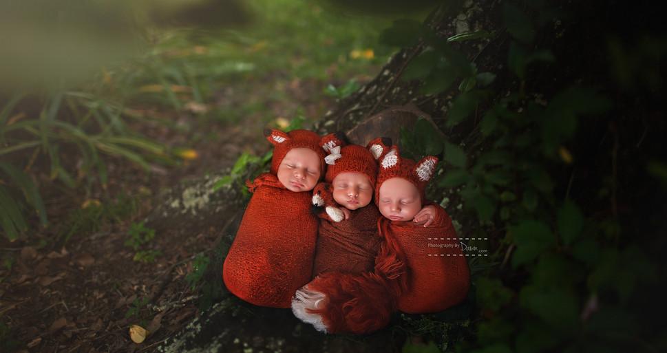 Newborn Triplet Foxes