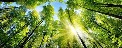 Journée Bien-Etre au Naturel