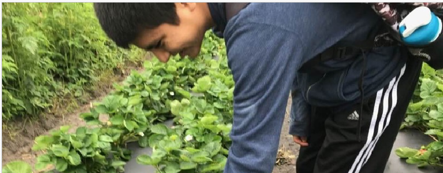 2020 Bedners Farm Stawberry U-Pick