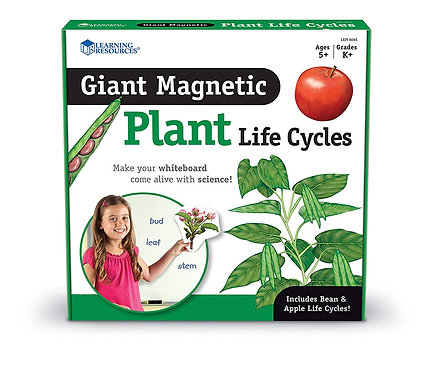 Plant Life Cycle - Magnetic