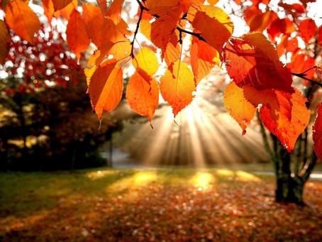 Herfstvakantie verlengd tot 15 november - UPDATE