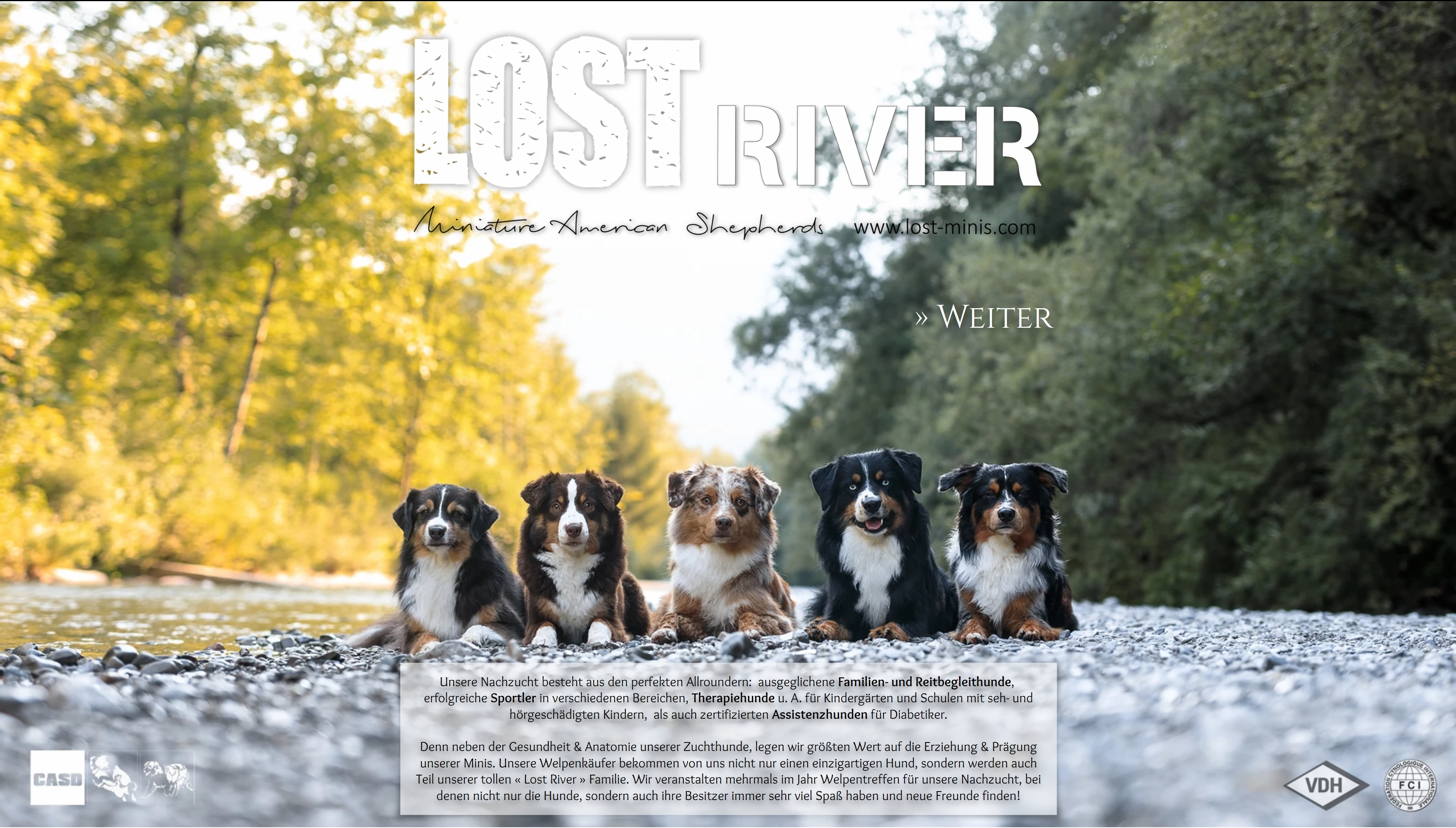 Lost River Mini American Shepherds