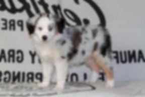 Luna im Alter von 9 Wochen