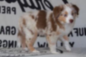 Marlow im Alter von 9 Wochen