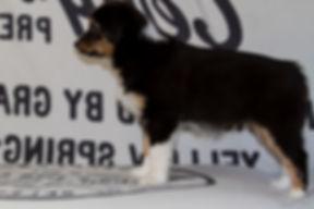 Zelda im Alter von 9 Wochen